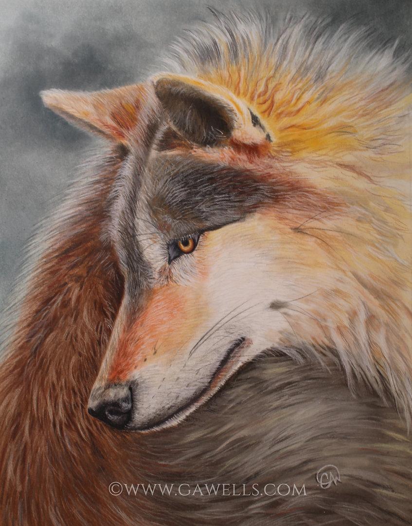 Wolf T6 WM.jpg