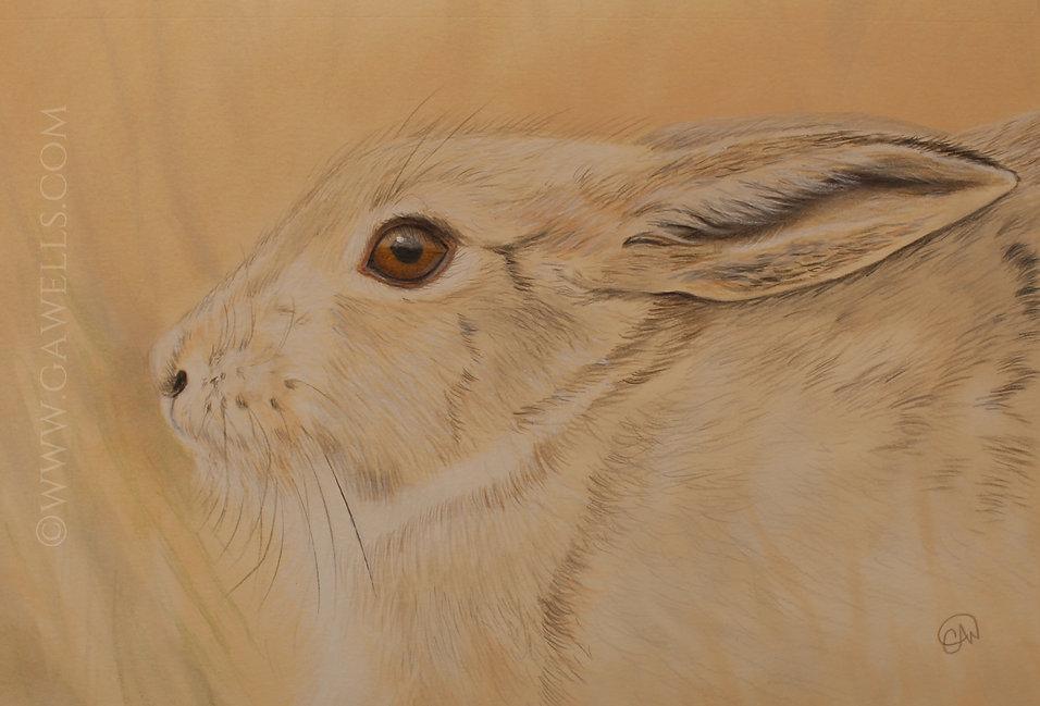 T6 Bunny Rabbit WM.jpg