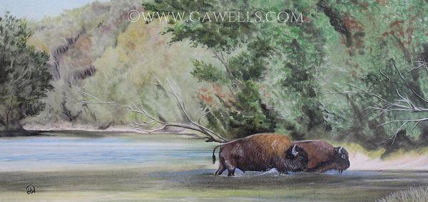 buffalo xing WM.jpg