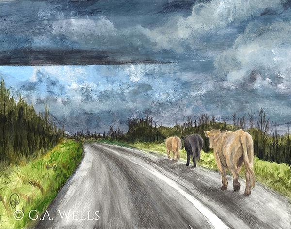 Irish cows WM.jpg