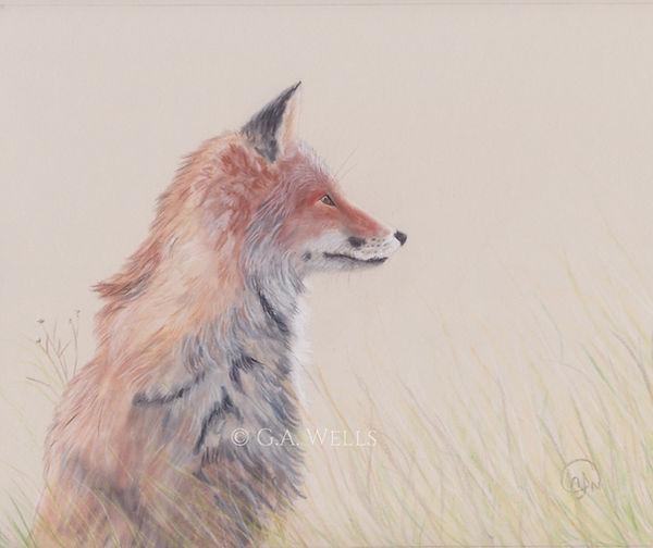 red fox WM.jpg