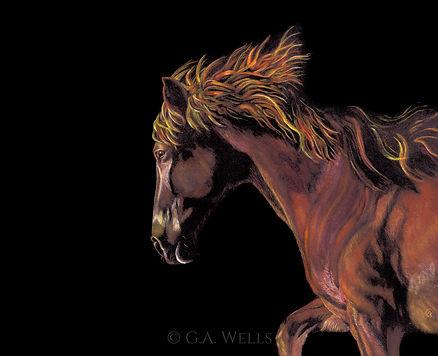 horse on black WM.jpg