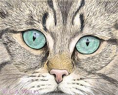 Blue eyed cat WM.jpg