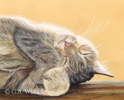Sleeping cat WM.jpg