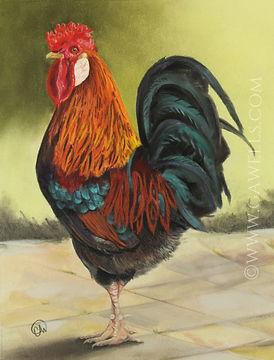 rooster t6.jpg wm.jpg