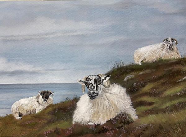 Sheeps! .jpg