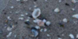 Muscheln Strand Graal-Müritz Meeresblick
