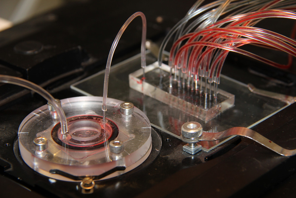 Tissue Dynamics liver on chip microdevice