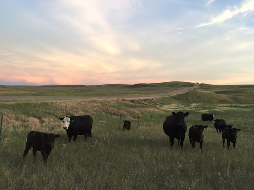 ATTN: LIVESTOCK PRODUCERS & LAND MANAGERS