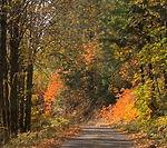 trees_edited.jpg