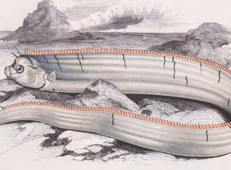Sightings of rare oarfish in Japan raise fears of earthquake and tsunami