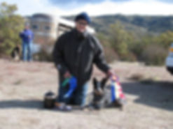 Dog Training - Herding