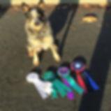 Dog Training - K9 Nose Work Trial