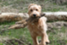 Dog Training Grants Pass Oregon