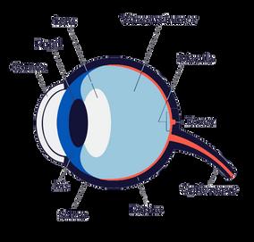 Child-excessive-screen-time-myopia-digra