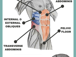 What is the core? Muscle group, benefits and key actions