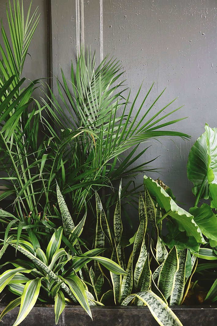 snake-plant-beside-taro-and-palm-plant-n