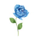 —Pngtree—hand painted blue rose flower_4