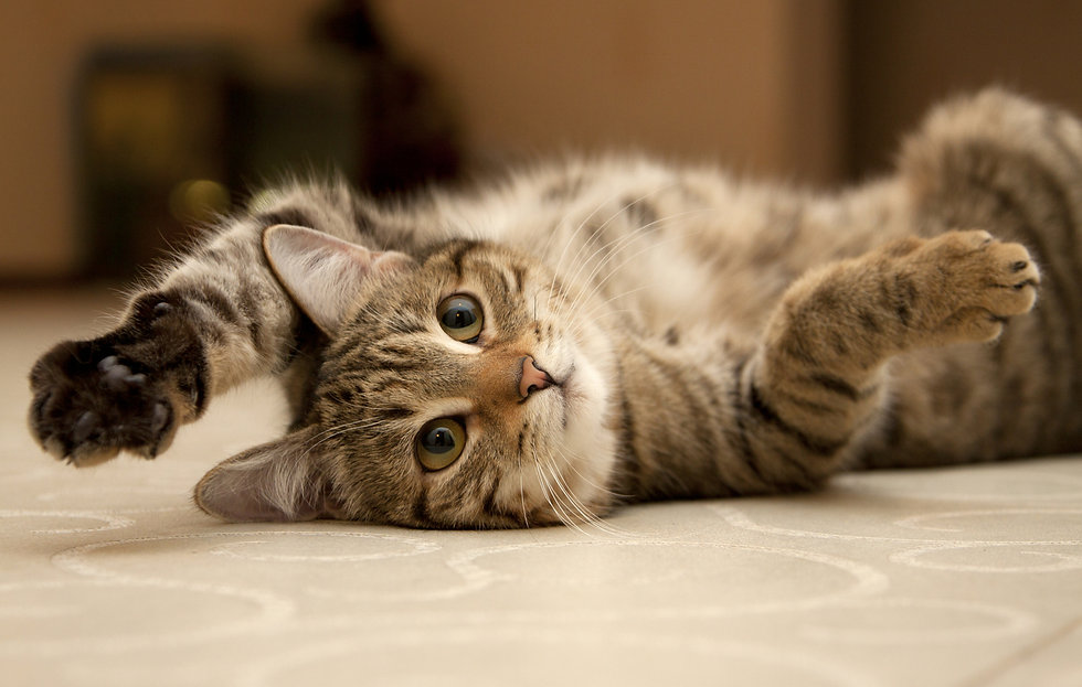 cat.jpeg