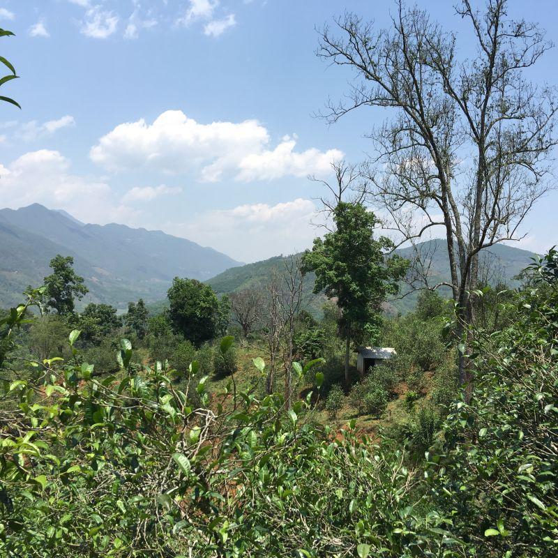 Jardin Xigui