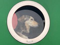 doggy dog Pauline.jpg