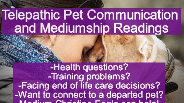 Pet Communication Psychic Reading w/Medium Christina -Phone/Video &Email Options