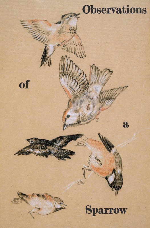 Observations of a Sparrow