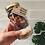 Thumbnail: Raw By Rochelle - DIY Bliss Ball Jar Chocolate Berry