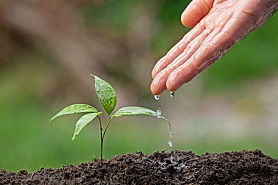 close-up-picture-hand-watering-sapling-p