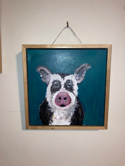 Pig acrylics