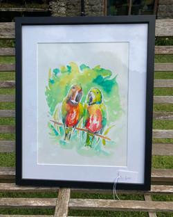 Parrots watercolour