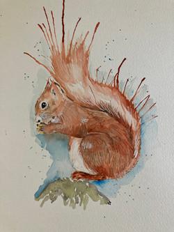 Squirrel watercolour