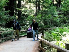 Muir Woods Trip