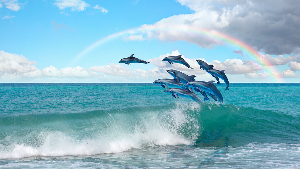 Group of dolphins jumping on the water R