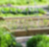 start-community-garden-benefits-1068x713