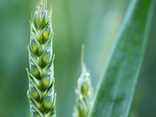Take Action: Support a Strong Farm Bill