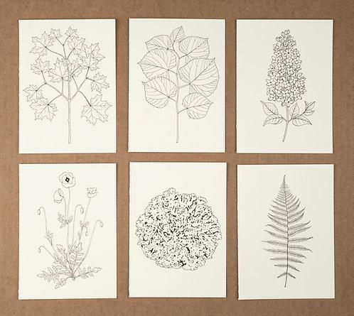 Cards: Chernobyl Flora & Fauna Prints (6)