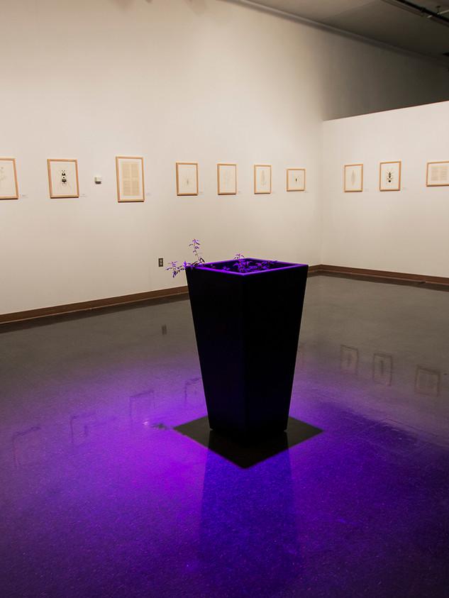 Installation shot at Bruce Gallery of Edinboro University.