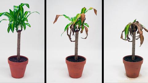 Stunted Growth (Sunblock)