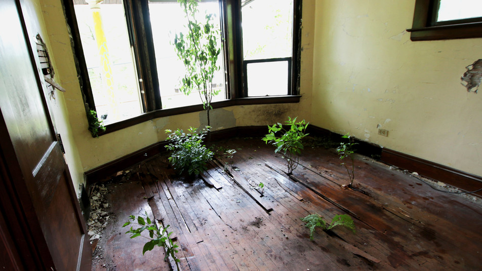 Installation in a foreclosed house in Slavic Village of Cleveland, Ohio for Rooms to Let 2017. For this I pried up the floorboards and installed living plants underneath.
