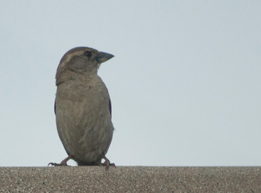 bird-IMG_7832.jpg