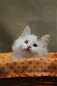 kitten-IMG_6907-border.jpg