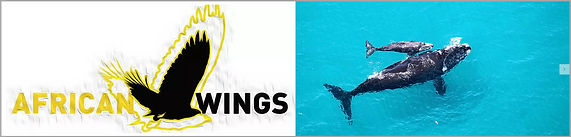 African Wings.png