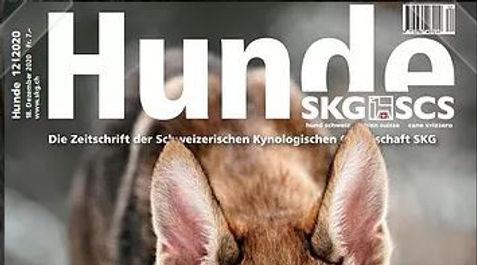 hunde_2.jpg