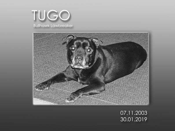 """Bullhawk Lawbeaker """"Tugo"""""""