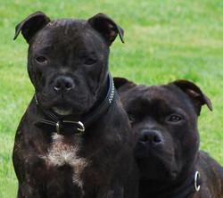 Elsie 5 month & Ben