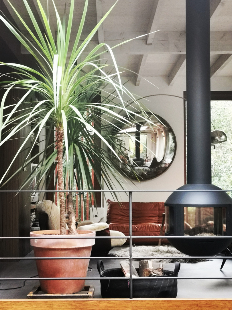 Houseplant interior design I