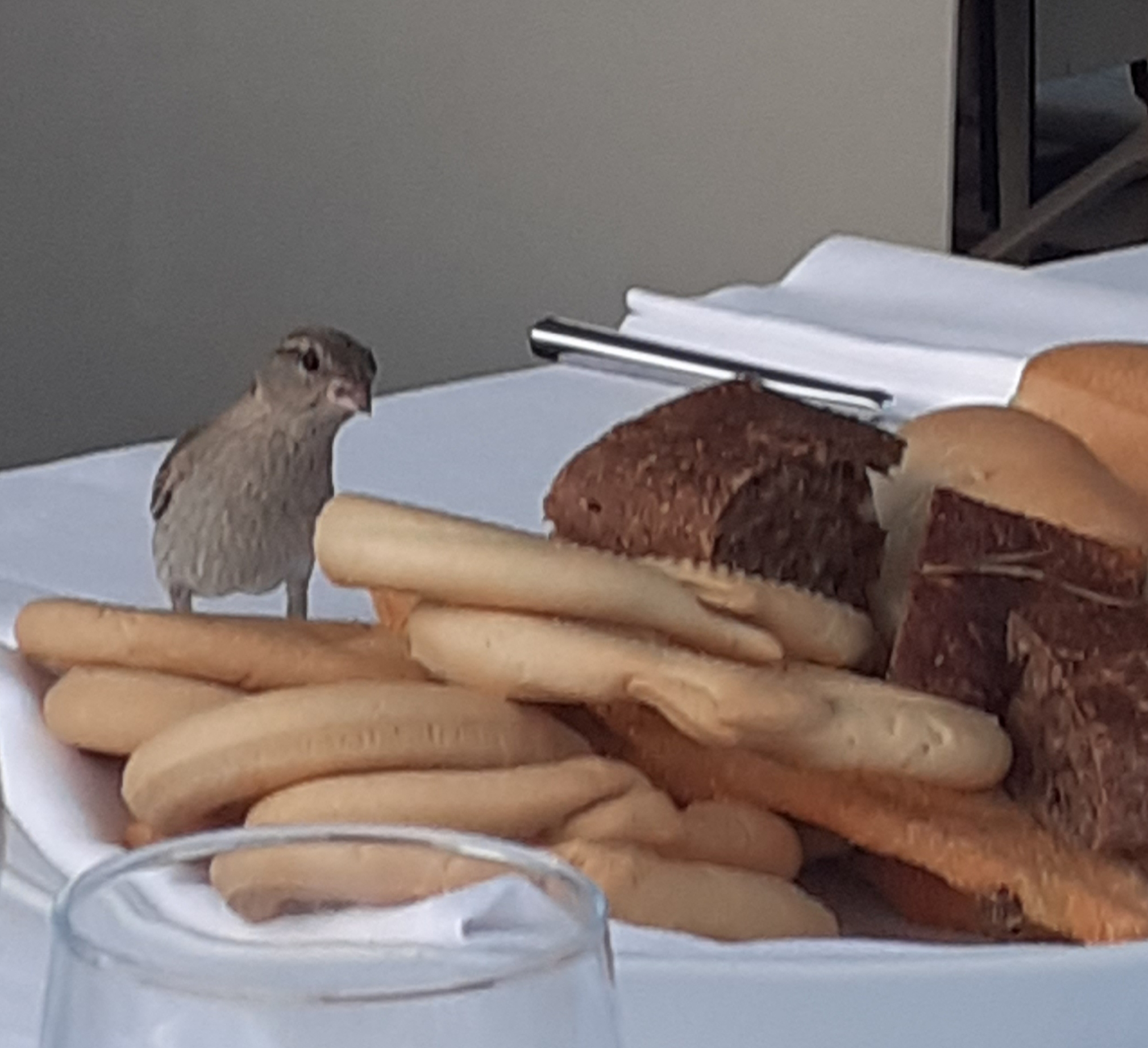Uccellino - Sottomarina - Lorenza