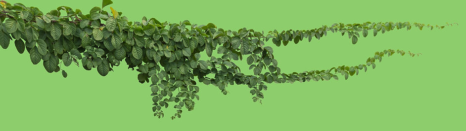 Biolo-Green-Vines.jpg