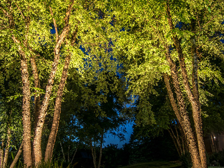Backyard Design for Optimal Beauty